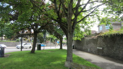 Fears for future of Bristol's trees